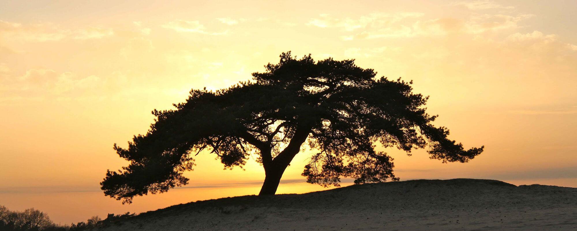 Symbool levensboom in Atma visie