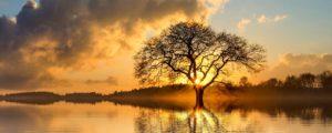 betekenis van het woord atma